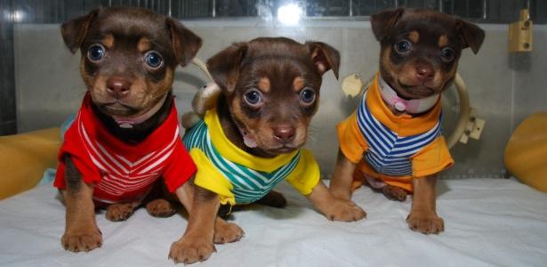 Nova série do Animal Planet acompanhará donos de pets dispostos a desembolsar fortunas para clonarem seus bichinhos de estimação