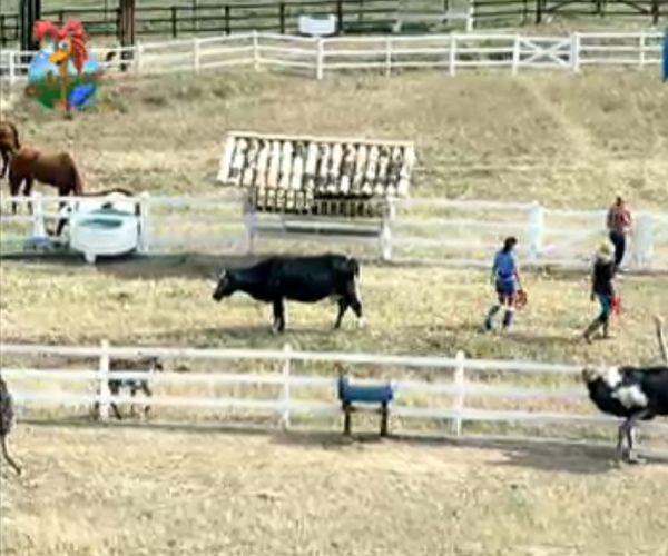 Anna Markun e Monique Evans ajudam Taciane a cuidar dos cavalos (30/7/11)