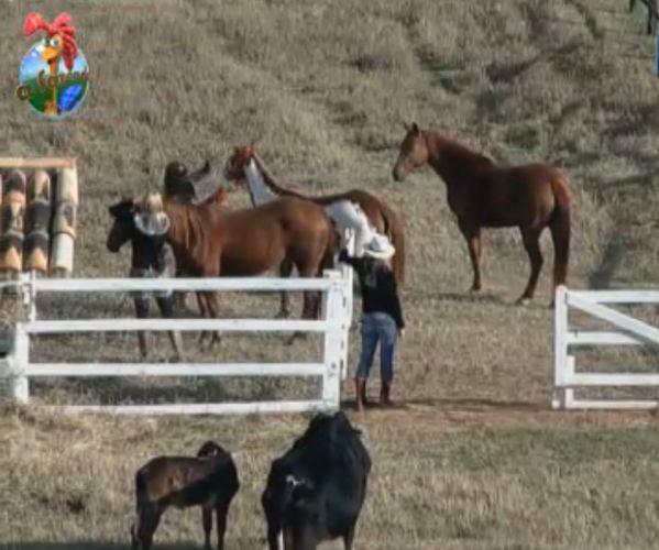 Monique Evans e Raquel ajudam Anna Markun a cuidar dos cavalos (06/8/11)