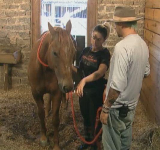 Gui Pádua ensina Dani Bolina que é preciso deixar a égua cheirá-la para o animal se acostumar (12/8/11)