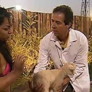 Mulher Melancia ajuda veterinário Reinaldo Micai a cortar cordão umbilical de borrego (27/10/10)