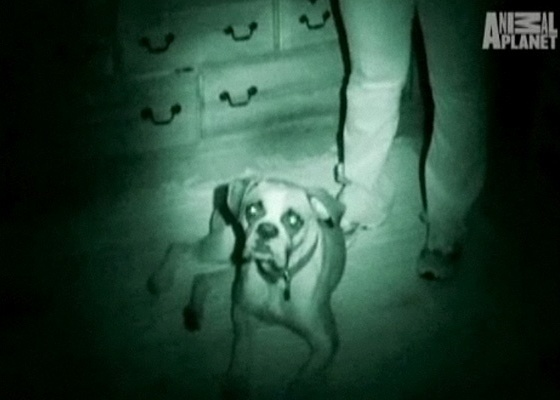 Cena do v�deo da s�rie Instinto Paranormal (The Haunted), do Animal Planet