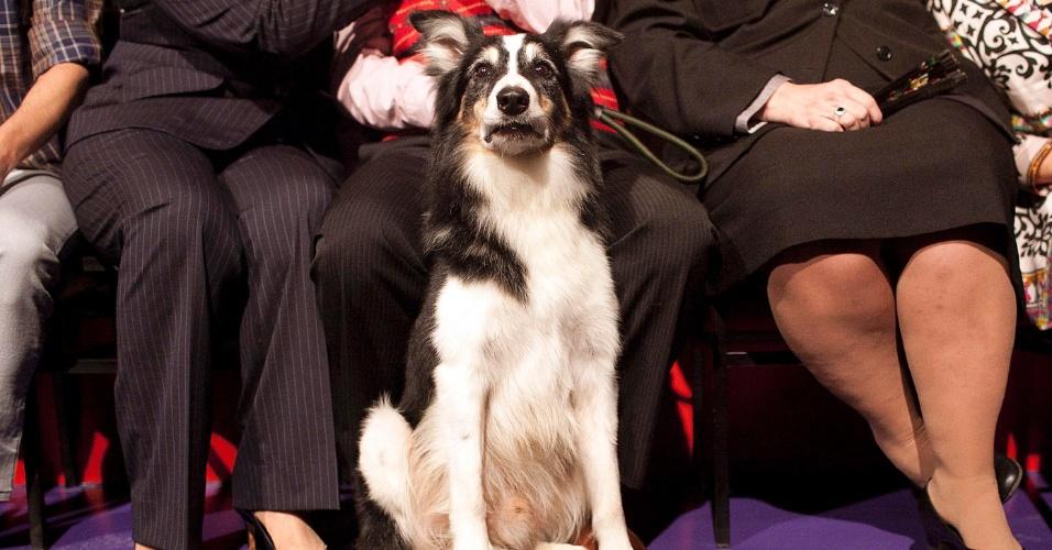 """O cão Rabito, que participa do remake de """"Carrossel"""", posa para foto durante evento de divulgação da novela (7/5/12)"""