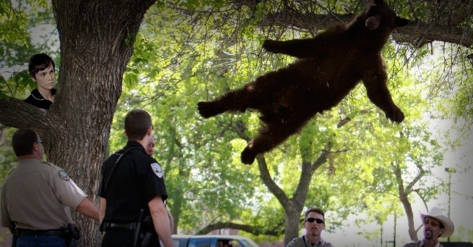 Nina foi quem convenceu o urso preso em uma árvore no campus da Universidade de Colorado a se jogar