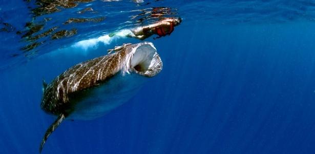 """A apresentadora Renata Maranhão do """"Good News"""" em um mergulho com o tubarão-baleia (05/06/2012)"""
