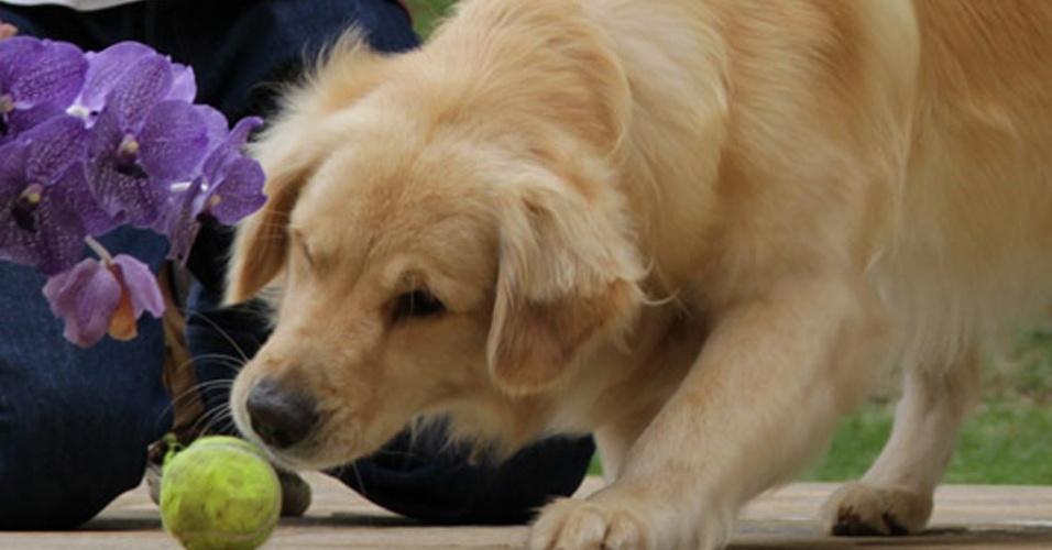 """""""A gente muda o cachorro a partir do comportamento das pessoas,"""" diz Rossi"""