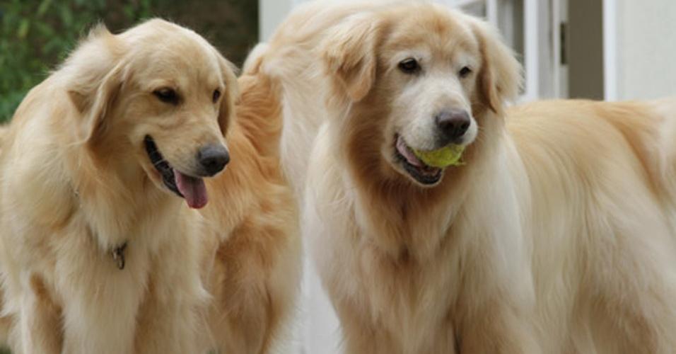 """Além de cães e gatos, """"Missão Pet"""" vai abrir espaço também para animais exóticos e selvagens"""