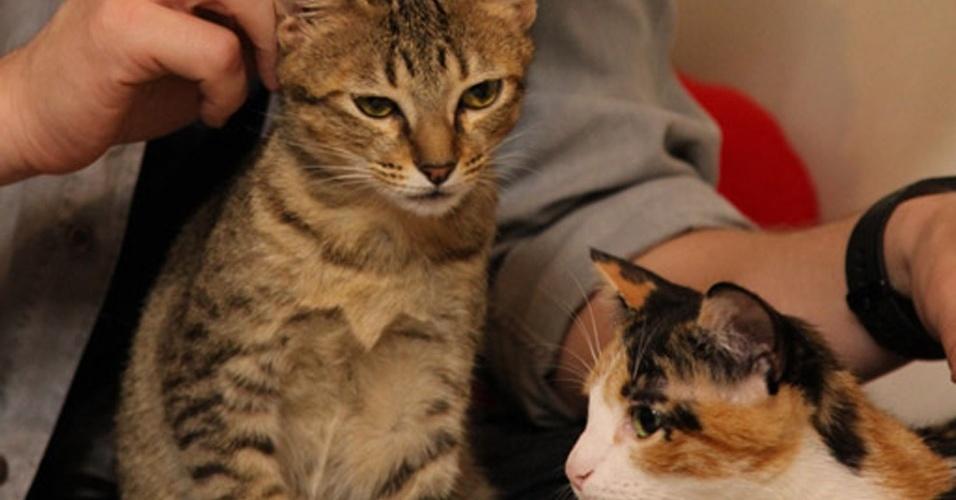 """""""Missão Pet"""" vai ao ar às terças às 22h30 no canal NatGeo"""