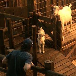 João Kléber conversa com as cabras e diz que uma