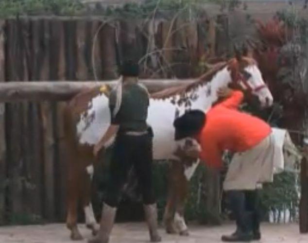 Gui Pádua ajuda Monique com o cavalo (21/8/2011)