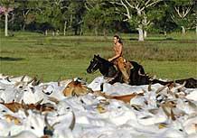 Cena de <i>Bicho do Mato</i>, ambientada em fazenda no Pantanal
