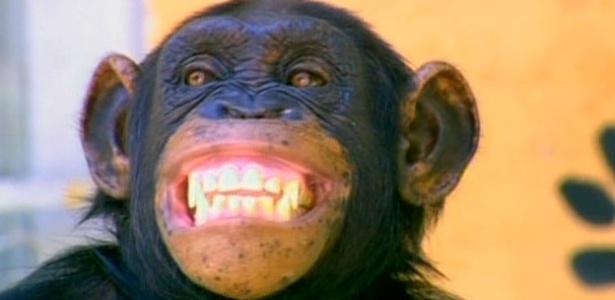 """Macaco xico de """"Caras & Bocas"""""""