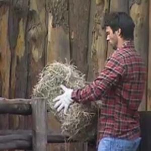 Daniel inicia sua nova atividade na fazenda (9/10/10)