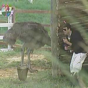 Sérgio Mallandro se esconde de avestruz enquanto faz sua tarefa diária (09/10/2010)