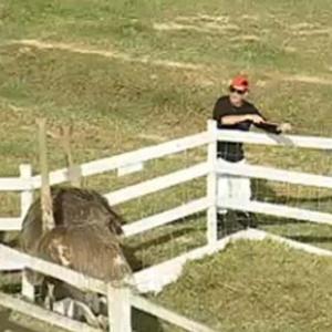 Mallandro foge dos avestruzes (10/10/10)