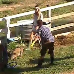 Janaina ajuda Sergio Abreu com os porcos (28/11/10)