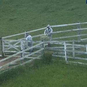 Chove bastante na manhã desta terça-feira na fazenda (14/12/10)