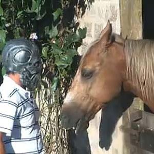 Daniel Bueno coloca máscara do filho para se despedir do cavalo Jano (20/12/10)