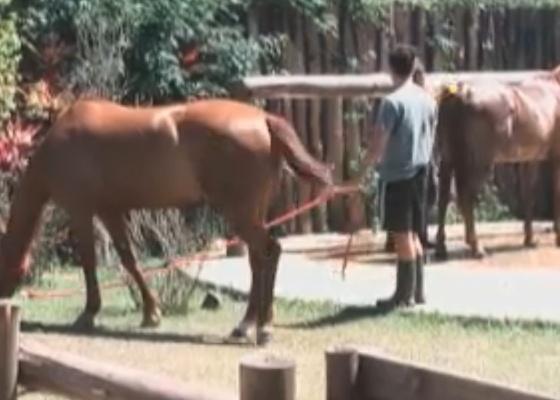 Thiago Gagliasso ajuda a cuidar dos cavalos depois de cochilo na varanda (25/9/11)