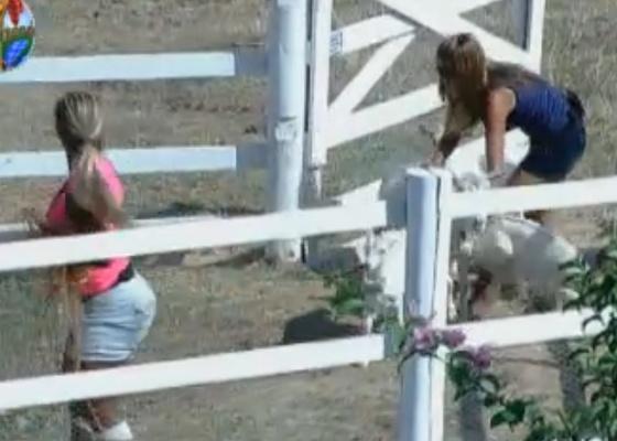 Valesca dá bronca em Raquel por deixar cabras fugirem (01/10/11)