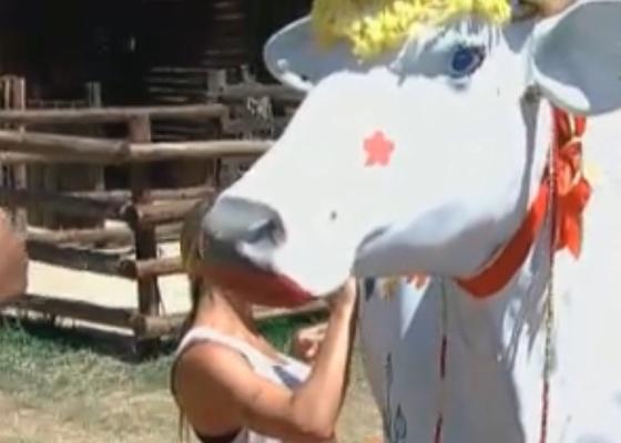 Peoas pintam vaca de gesso em atividade (07/10/11)
